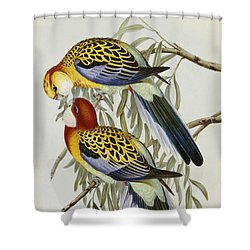 Eastern Rosella Shower Curtain by John Gould