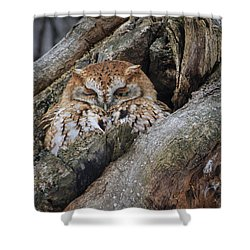 Eastern Screech Owl 2 Shower Curtain by Gary Hall