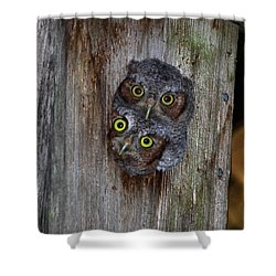 Eastern Screech Owl Chicks Shower Curtain
