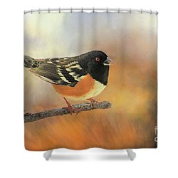 Eastern Spotted Towhee Shower Curtain