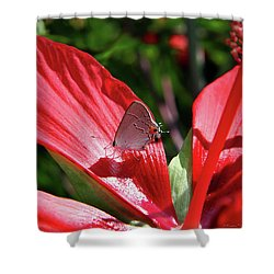 Eastern Tailed Blue Butterfly On Red Flower Shower Curtain