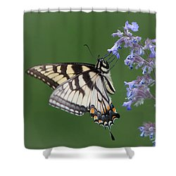 Eastern Tiger Swallowtail Profile Shower Curtain