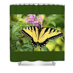 Eastern Tiger Swallowtail Butterfly Shower Curtain by Sheila Brown