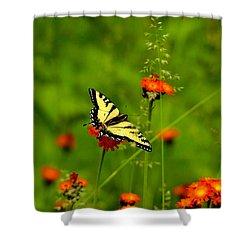 Eastern Tiger Swallowtail  Shower Curtain