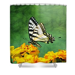Eastern Tiger Swallowtail Shower Curtain by Marion Johnson