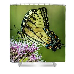 Eastern Tiger Swallowtail Shower Curtain