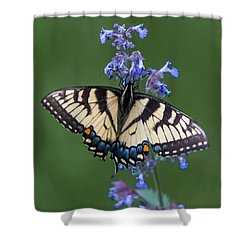 Eastern Tiger Swallowtail Wingspan Shower Curtain