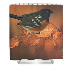 Spotted Towhee In Autumn Shower Curtain