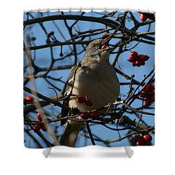 Shower Curtain featuring the photograph Eating Berries by Cathy Harper