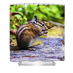 Shower Curtain featuring the photograph Eating Chipmunk by Jonny D