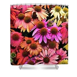 Echinacea Colour Shower Curtain
