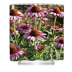Echinacea Shower Curtain by Cynthia Powell