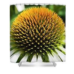 Shower Curtain featuring the photograph Echinacea - Head And Shoulders by Wendy Wilton