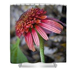 Echinacea Hot Papaya Shower Curtain by Teresa Mucha