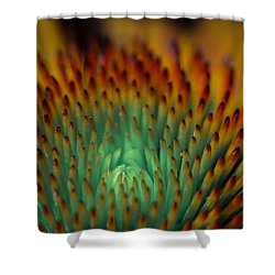 Echinacea Macro Shower Curtain