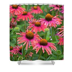Echinacea Mama Mia Shower Curtain
