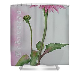 Echinacea Shower Curtain by Ruth Kamenev