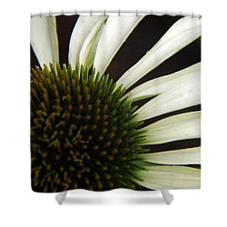 Echinacea Shower Curtain by Priscilla Richardson