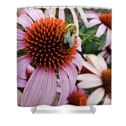Echinacea Tea Time For Bee Shower Curtain