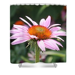 Echinacea With Visitor Shower Curtain
