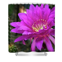 Shower Curtain featuring the photograph Echinopsis In Hot Pink  by Saija Lehtonen