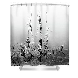 Echoes Of Reeds 1 Shower Curtain