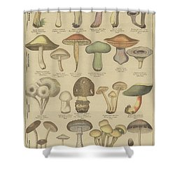 Edible And Poisonous Mushrooms Shower Curtain by French School