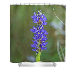 Edible Pickerel Weed Shower Curtain by Christopher L Thomley