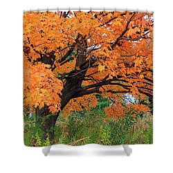 Edna's Tree Shower Curtain