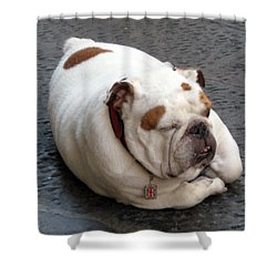 Eduardo Of Firenze Dog Shower Curtain