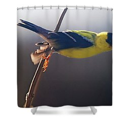 Effortless Shower Curtain by Susan Capuano