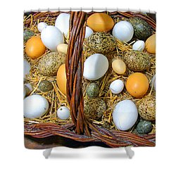 Eggs In All Sizes And Cool Colors Shower Curtain