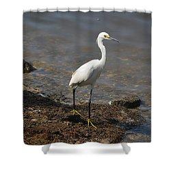 Egret 1 Shower Curtain