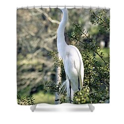 Egret 2 Shower Curtain by Michael Peychich