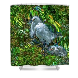 Egret And Chicks Shower Curtain