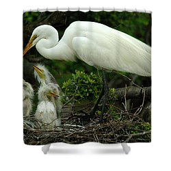 Majestic Great White Egret Family Shower Curtain by Bob Christopher