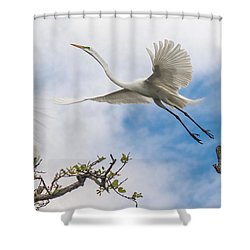 Shower Curtain featuring the photograph Egret Grace by Kelly Marquardt