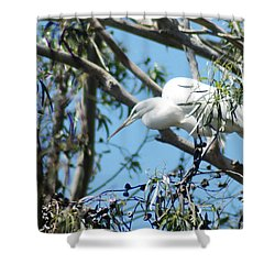 Egret In Rookery Shower Curtain