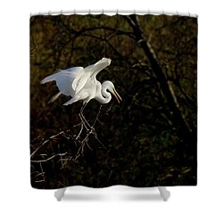 Shower Curtain featuring the photograph Egret by Kelly Marquardt