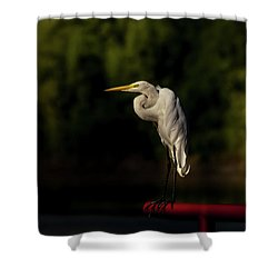 Shower Curtain featuring the photograph Egret On Deck Rail by Robert Frederick