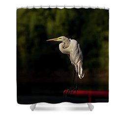 Egret On Deck Rail Shower Curtain by Robert Frederick
