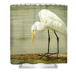 Egret Portrait Shower Curtain