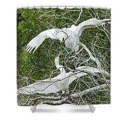 Shower Curtain featuring the photograph Egret Rumble by George Randy Bass