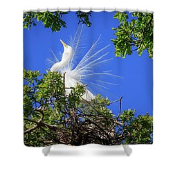 Egret Showing Off Shower Curtain