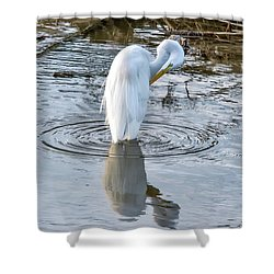 Egret Standing In A Stream Preening Shower Curtain