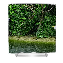 Egret Wakodahatchee Florida Wetlands Shower Curtain