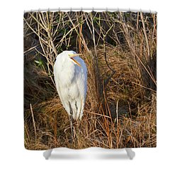 Shower Curtain featuring the photograph Egret With Something To Say by George Randy Bass