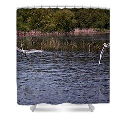 Egrets IIi Shower Curtain by Gary Adkins