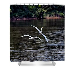 Egrets V Shower Curtain by Gary Adkins