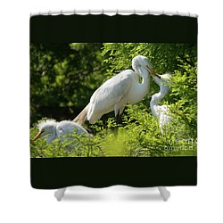 Egrets With Their Young Shower Curtain